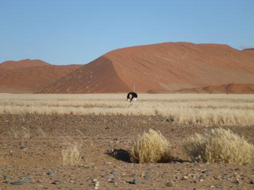 ナミビアナミブ砂漠2 (4)