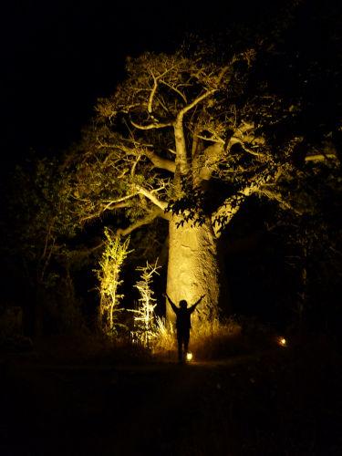 夜のプラネットバオバブ (3)