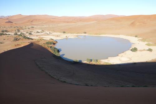 ナミビアナミブ砂漠2 (13)