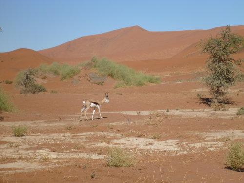 ナミビアナミブ砂漠2 (28)