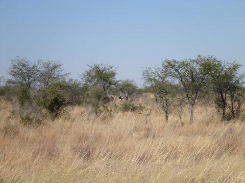ボツワナはアフリカで大好きになった国 (1)
