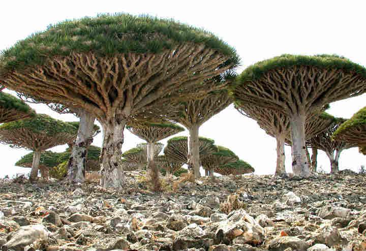 私が死ぬまでに行きたい絶景3:イエメンのソコトラ島「インド洋のガラパゴス」 (1)