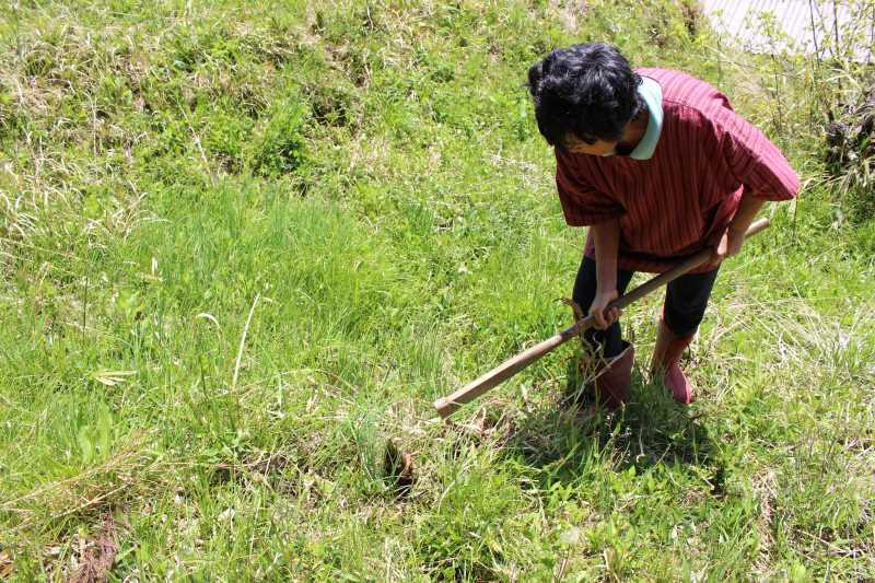 裏庭での「たけのこ掘り」が衝撃的だった件について (4)
