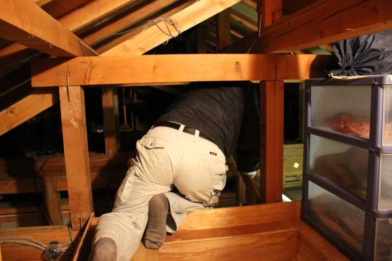屋根裏に住み着いたハクビシンの駆除に行ってみた (6)