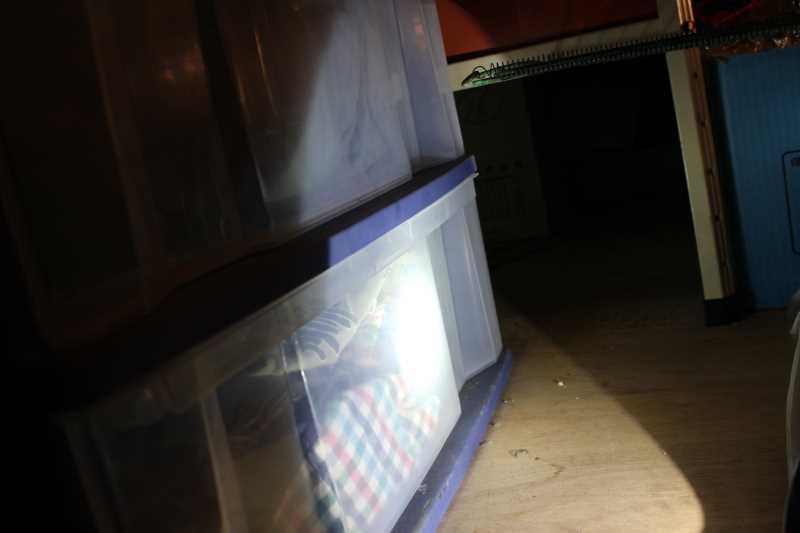 屋根裏に住み着いたハクビシンの駆除に行ってみた (5)