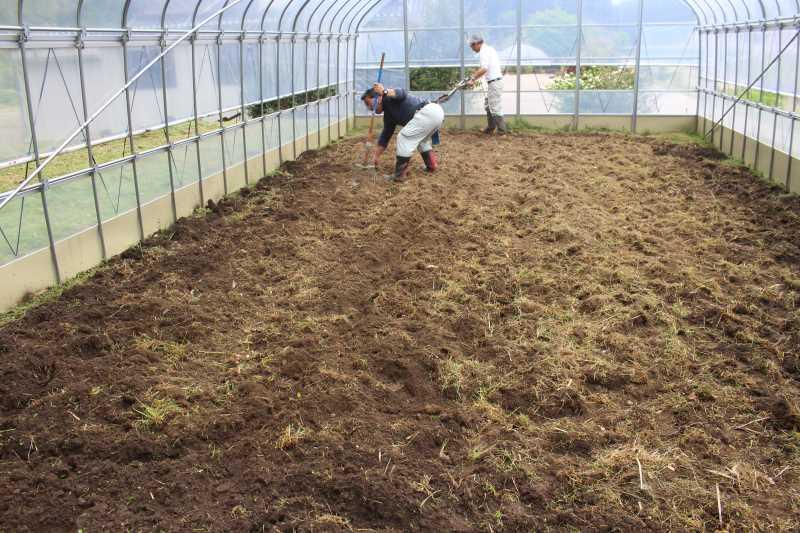 草刈機と耕運機を使いこなしてビニールハウスを耕す方法 (13)