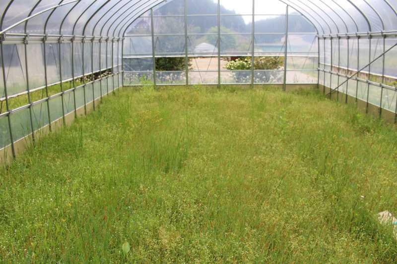 草刈機と耕運機を使いこなしてビニールハウスを耕す方法 (6)