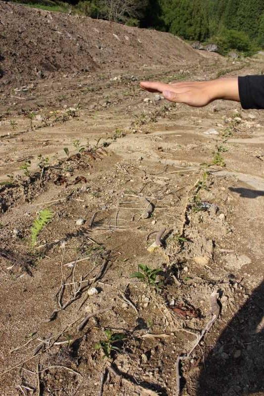 新しい茶畑の写真画像 (2)