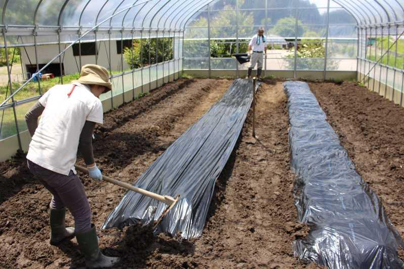 ビニールハウスの畝の作り方とホースで沢から水源を確保した件 (6)