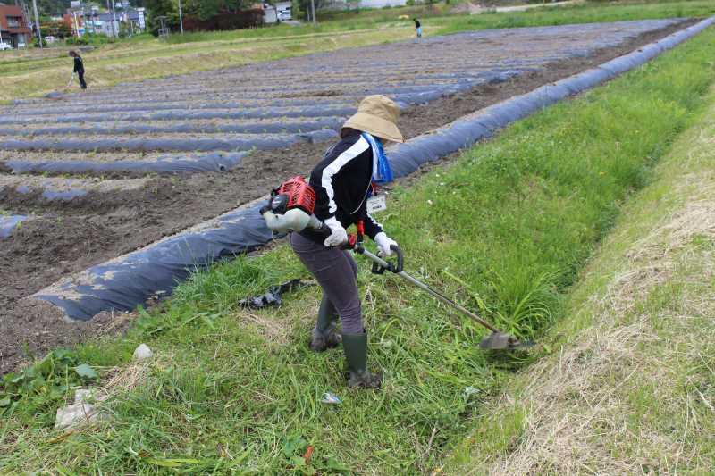 草刈機と耕運機を使いこなしてビニールハウスを耕す方法 (4)