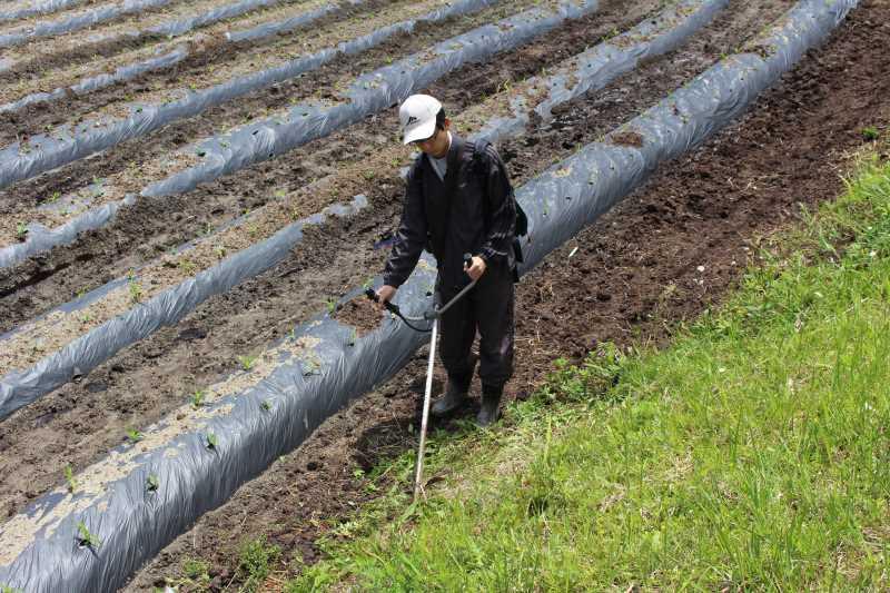 草刈機と耕運機を使いこなしてビニールハウスを耕す方法 (5)