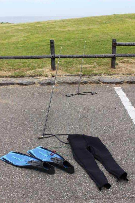 福井で魚突き!80cm弱の真鯛と40cm強の石鯛とキジハタとったどー!!