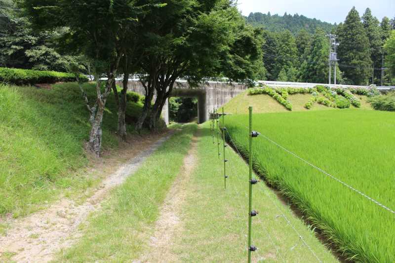 愛知県新城市作手の「保永の三滝」の滝つぼで泳いでみた! (4)