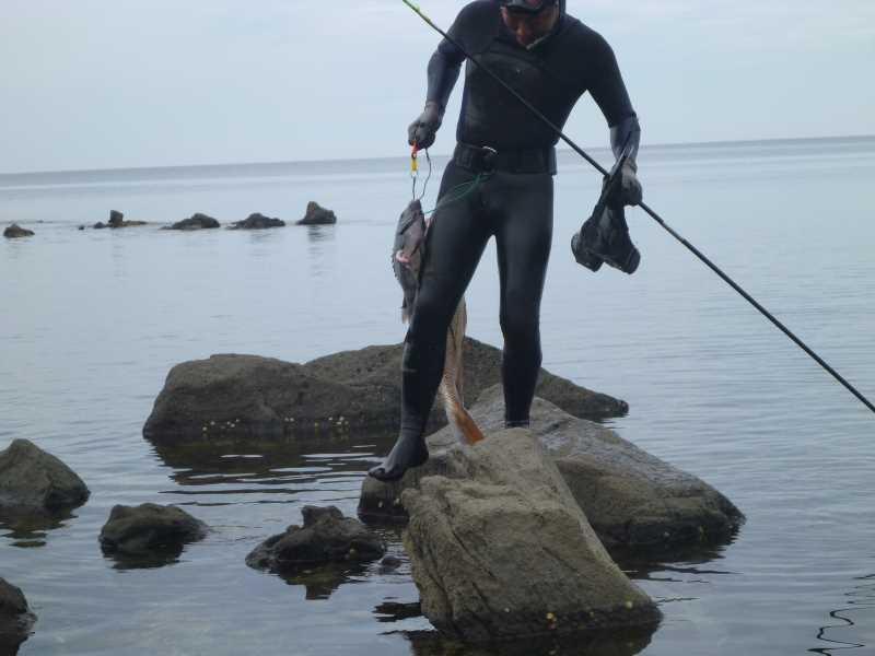 福井で魚突き!80cm弱の真鯛と40cm強の石鯛とキジハタとったどー!! (3)