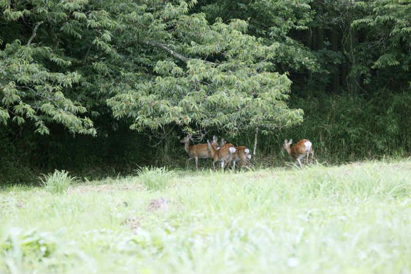 ハンター試験に無事合格!罠猟の狩猟免許をゲットしたので、2014年から鹿や猪を獲ります!! (2)