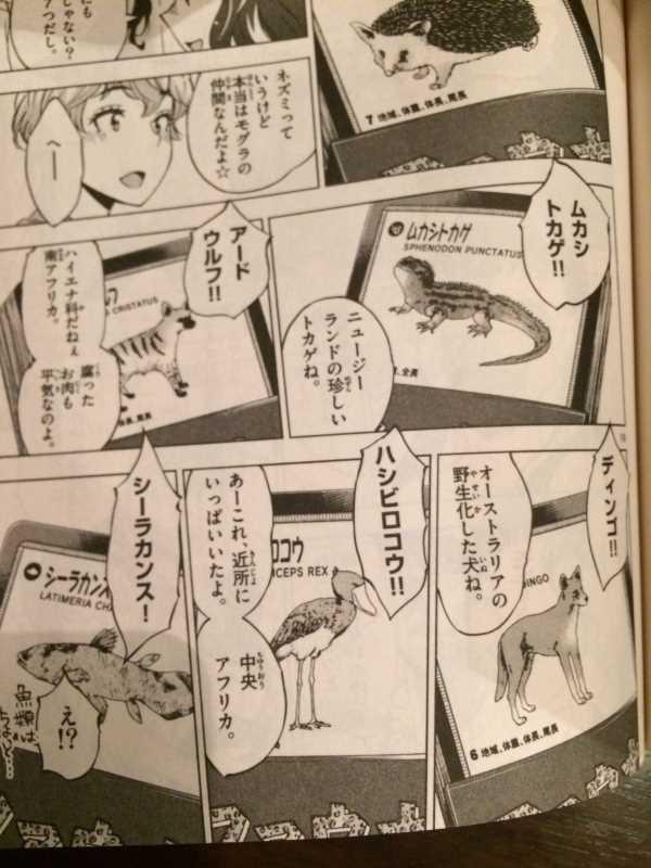 放課後さいころ倶楽部で紹介された動物クイズのボードゲーム「ファウナ」 (5)