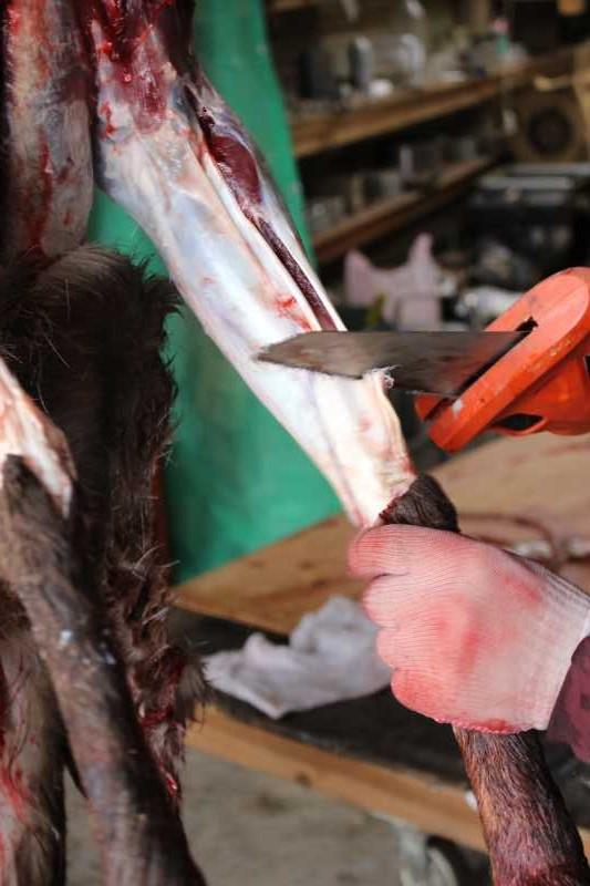 鹿の解体の初体験はクリスマスイブ!聖なる夜に鹿肉をいただきました (5)