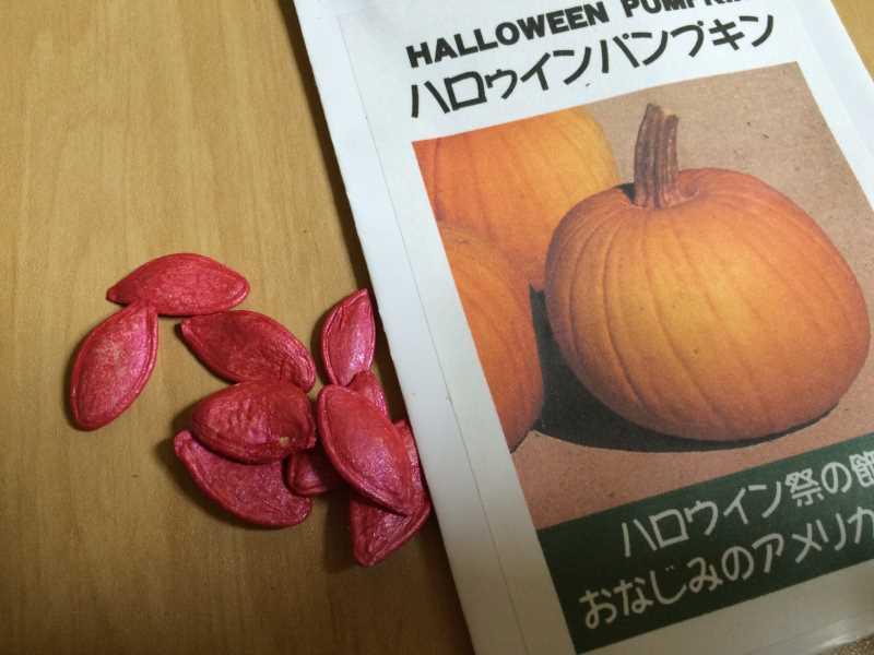 【珍しい野菜栽培】5.珍しい野菜のタネを植えたらネズミに喰われたよ (1)
