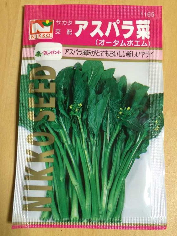【珍しい野菜栽培】4.千成ひょうたん・特大ひょうたんとパクチーの種をゲット! (7)