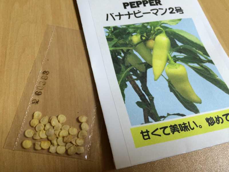 【珍しい野菜栽培】5.珍しい野菜のタネを植えたらネズミに喰われたよ (8)
