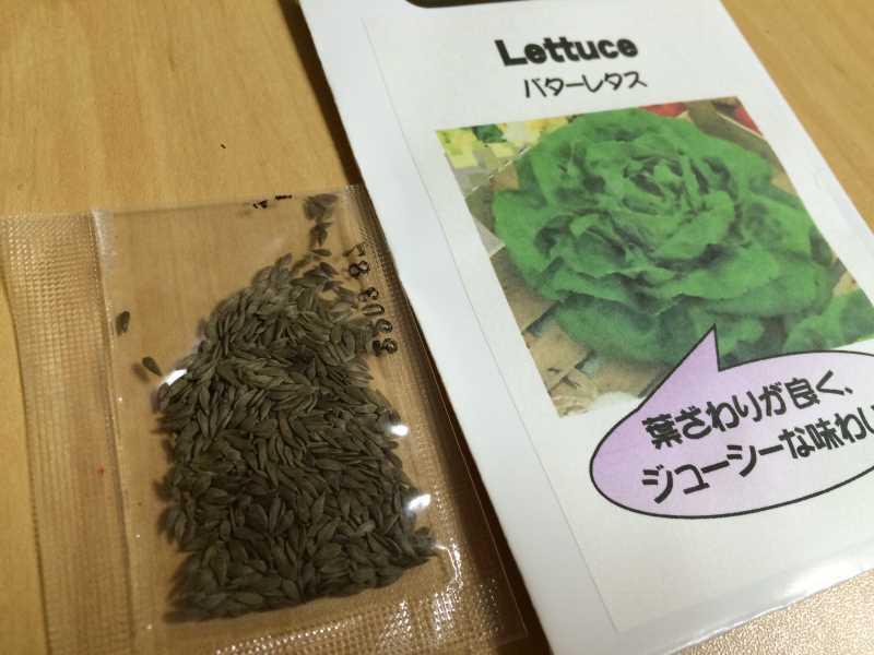 【珍しい野菜栽培】5.珍しい野菜のタネを植えたらネズミに喰われたよ (4)