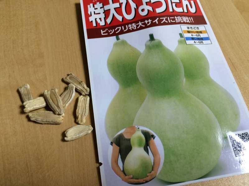 【珍しい野菜栽培】5.珍しい野菜のタネを植えたらネズミに喰われたよ (11)