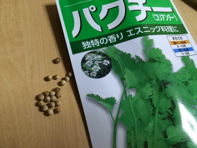 【珍しい野菜栽培】5.珍しい野菜のタネを植えたらネズミに喰われたよ (12)