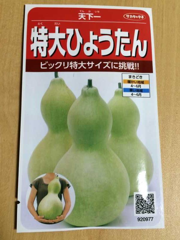 【珍しい野菜栽培】4.千成ひょうたん・特大ひょうたんとパクチーの種をゲット! (3)