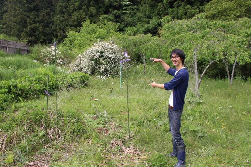 花粉症対策の食べ物「ジャバラ」の苗を植えたよ!【ミカン属の柑橘類】