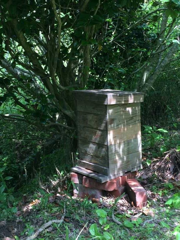 日本みつばち用の巣箱に蜜蝋を塗り、雨に濡れないように屋根を作った! (5)