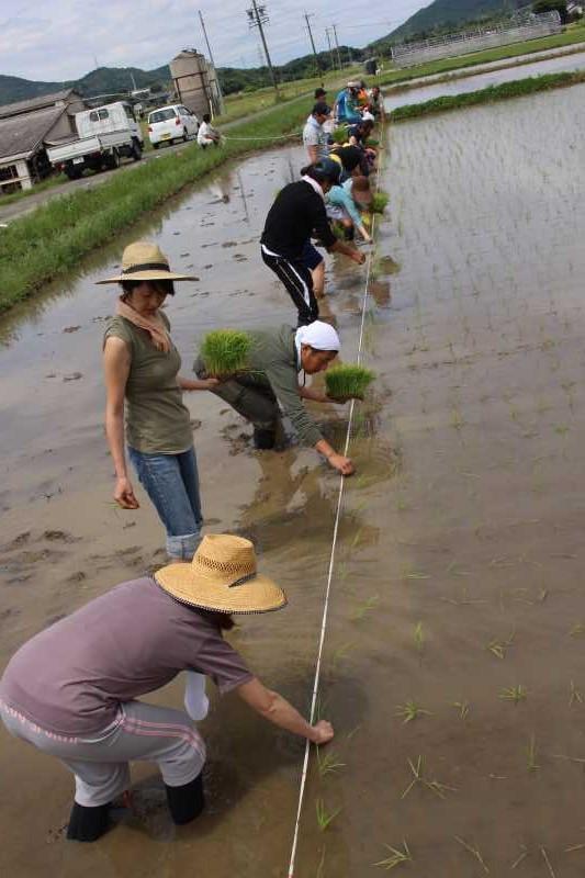 酒米の新しい品種「夢吟香」の田植えをしてきたよ!【純米大吟醸山咲楽づくり】 (7)