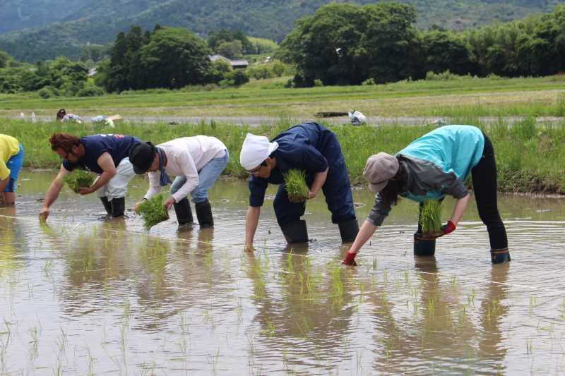 酒米の新しい品種「夢吟香」の田植えをしてきたよ!【純米大吟醸山咲楽づくり】 (8)