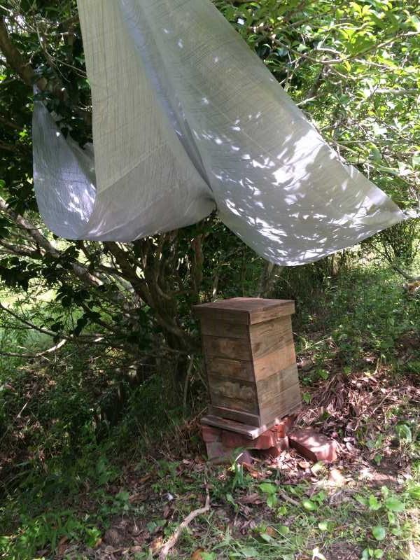 日本みつばち用の巣箱に蜜蝋を塗り、雨に濡れないように屋根を作った! (6)