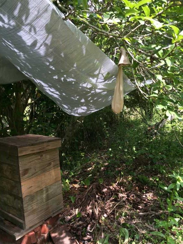 日本みつばち用の巣箱に蜜蝋を塗り、雨に濡れないように屋根を作った! (7)