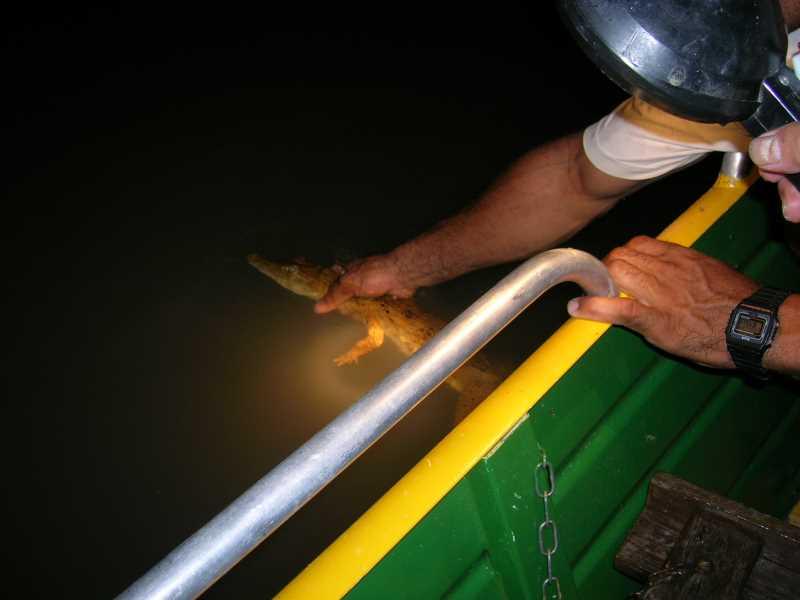 ブラジルのアマゾン川でワニ狩りをしたときの話【マナウス:個人ガイドツアー】 (5)