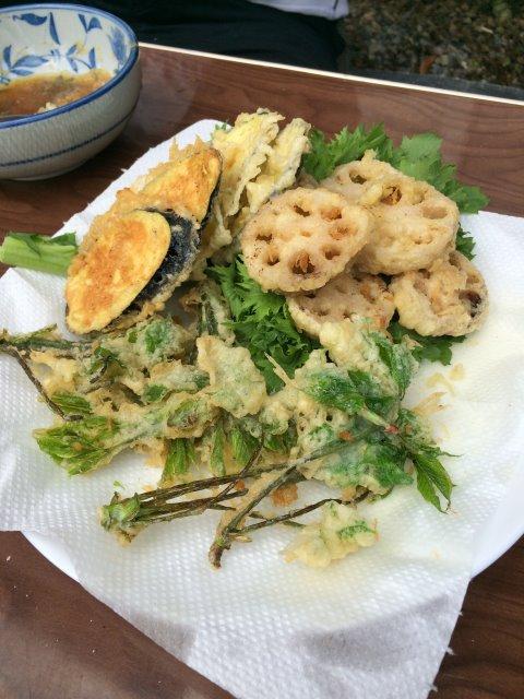 【山菜取り】コシアブラのてんぷらおいしいよ!こごみも苦味がなくて受けが良い。お茶摘みもやったなり! (4)