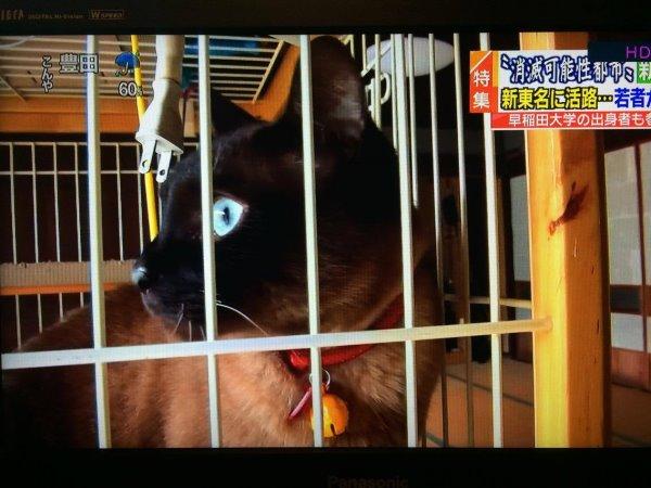 名古屋テレビ「UP!」に出演!地域おこしをする若者として放送されました【メ~テレ】 (1)