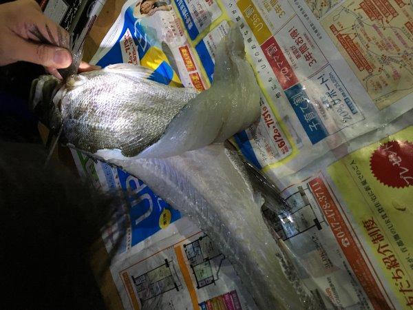 今年も福井で魚突き!キジハタとスズキとカサゴ他いろいろ獲ったど~!!! (3)