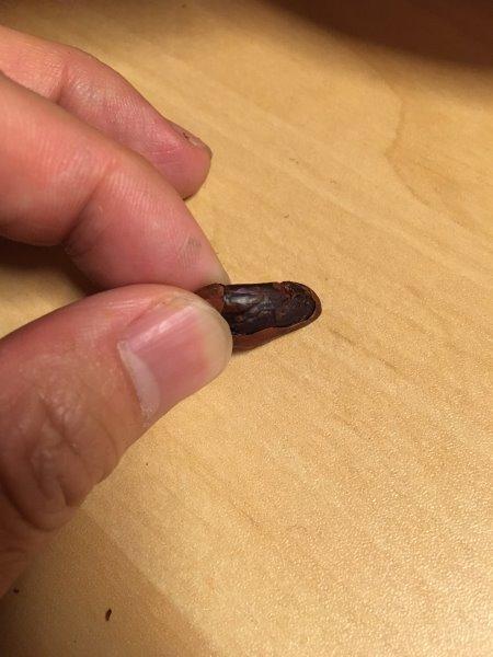 輸入したカカオ豆からチョコレートを作るワークショップを開催!真のチョコレートの作り方!! (3)